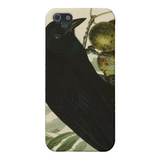 American Crow iPhone 5/5S Cover