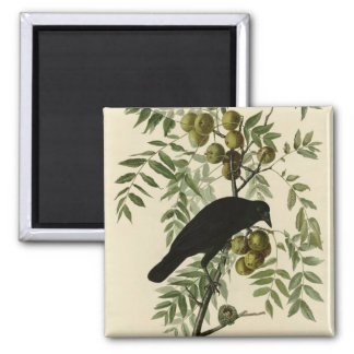 American Crow Refrigerator Magnet