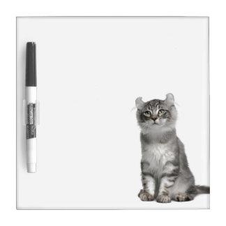 American Curl Kitten (3 months old) Dry Erase Board