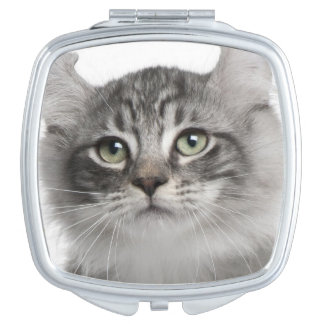 American Curl Kitten (3 months old) Makeup Mirror