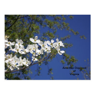 American Dogwood of Virginia postcard