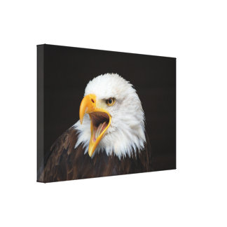 AMERICAN EAGLE - By Jean Louis Glineur Canvas Print