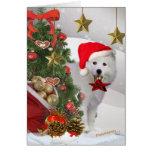 American Eskimo Christmas Star Cards