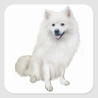 American Eskimo Dog (A) Square Sticker