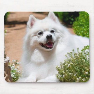American Eskimo dog lying on garden path Mouse Pad