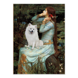 American Eskimo Dog - Ophelia Seated Poster