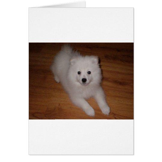 American_Eskimo_Dog_puppy Card