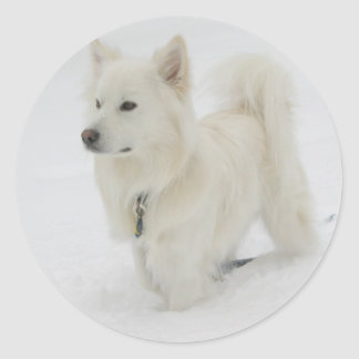 American Eskimo Puppy Dog Sticker / Label