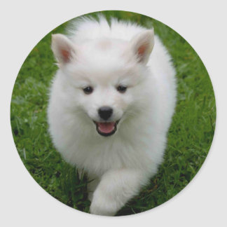 American Eskimo Puppy Dog Sticker / Label