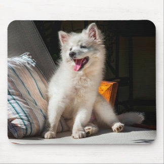 American Eskimo puppy sitting on a lawn chair Mouse Mat