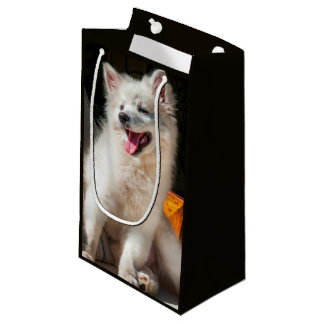 American Eskimo puppy sitting on a lawn chair Small Gift Bag