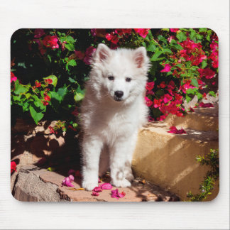 American Eskimo puppy sitting on garden stairs Mouse Mat