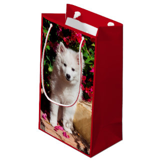 American Eskimo puppy sitting on garden stairs Small Gift Bag