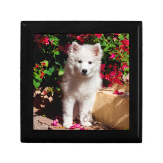 American Eskimo puppy sitting on garden stairs Small Square Gift Box