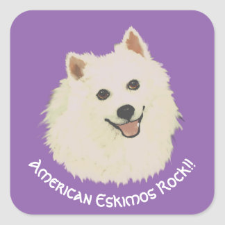 American Eskimos Rock!! on purple Square Sticker