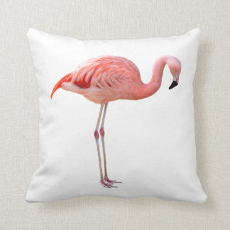 American Flamingo and Chilean flamingo Cushion