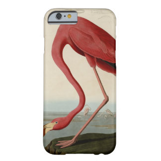 American Flamingo Barely There iPhone 6 Case