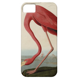 American Flamingo iPhone 5 Case
