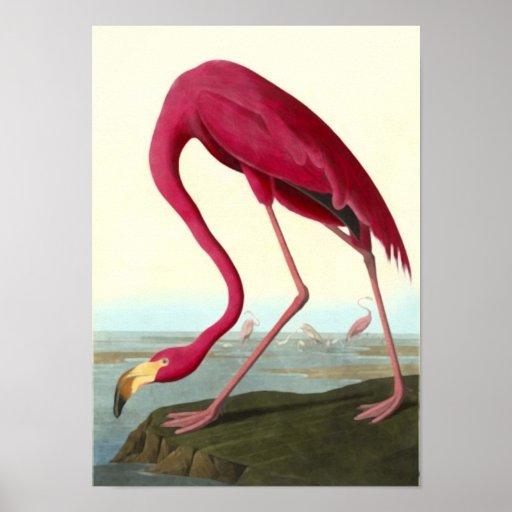 American Flamingo, John James Audubon Posters