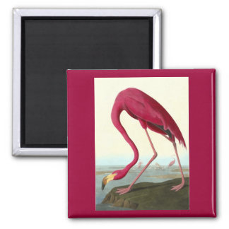 American Flamingo, John James Audubon Square Magnet