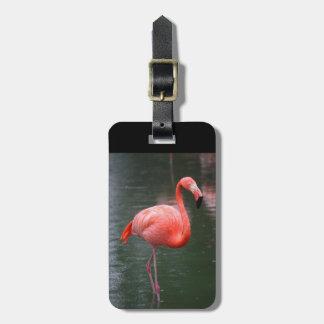 American Flamingo Luggage Tag