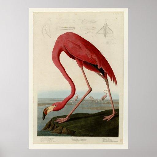 American Flamingo Posters