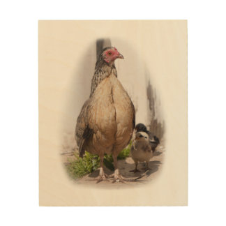 American Game Hen and Baby Chickens Wood Print