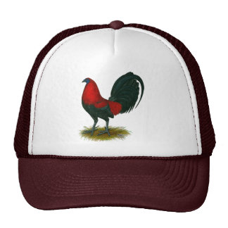 American Gamecock:  Brown Red Hat