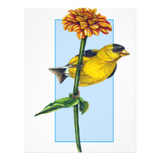 American Goldfinch and Zinnia flower 21.5 Cm X 28 Cm Flyer