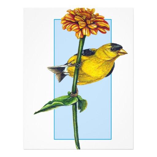 American Goldfinch and Zinnia flower Flyer Design