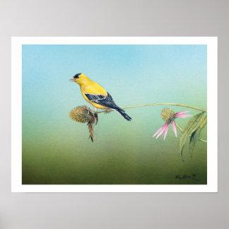 American Goldfinch Art Print - Tim Larson