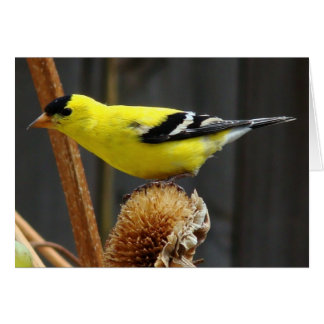 American Goldfinch- Father's Day Card