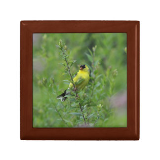 American goldfinch gift box