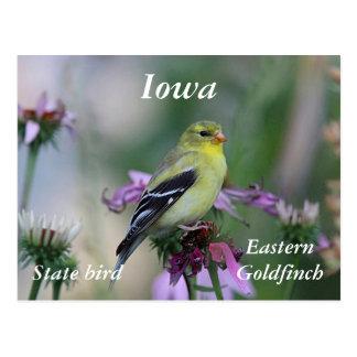 American goldfinch in the garden postcard