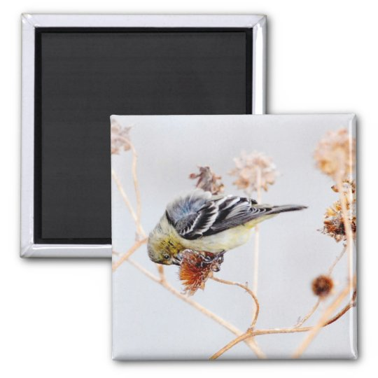 American Goldfinch Magnet