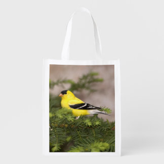 American Goldfinch male in a tree