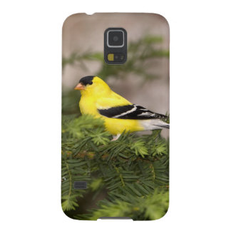 American Goldfinch male in a tree Galaxy S5 Cover