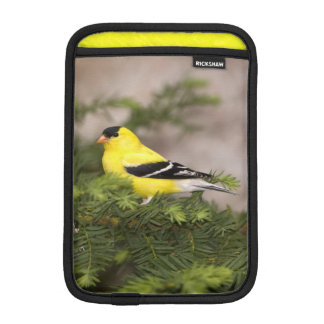 American Goldfinch male in a tree iPad Mini Sleeve