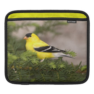 American Goldfinch male in a tree iPad Sleeve