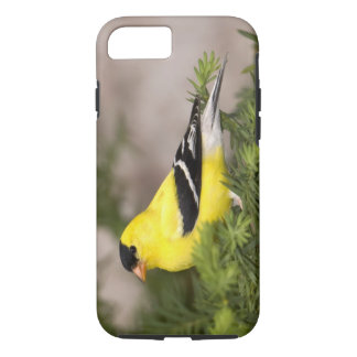 American Goldfinch male in a tree iPhone 8/7 Case