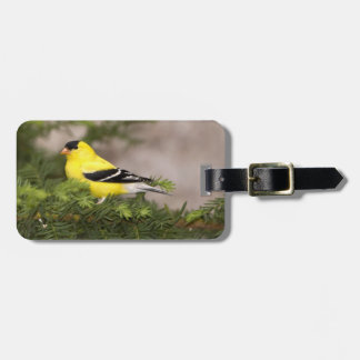 American Goldfinch male in a tree Luggage Tag