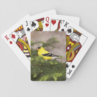 American Goldfinch male in a tree Playing Cards