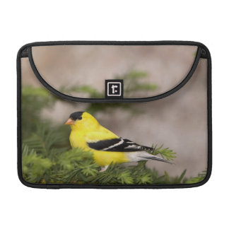 American Goldfinch male in a tree Sleeve For MacBook Pro