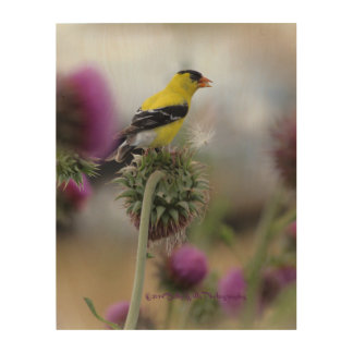 American Goldfinch on Wood Wood Canvas
