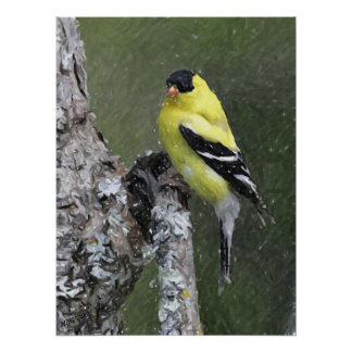 American Goldfinch Portrait Poster Print