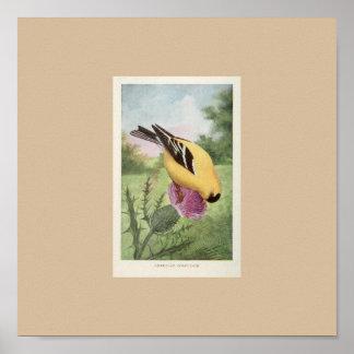 American Goldfinch Print