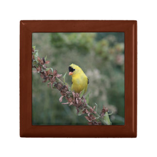 American goldfinch small square gift box