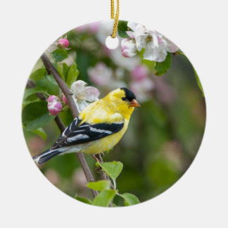 American Goldfinch with spring apple blossoms Christmas Ornament