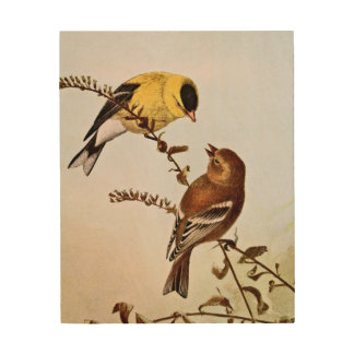 American Goldfinchs Bird Illustration Wood Canvases