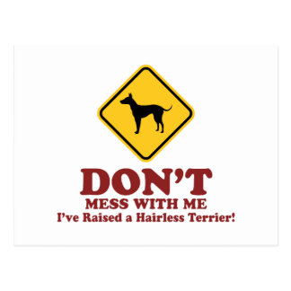American Hairless Terrier Postcards